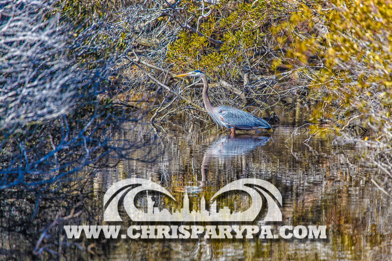 Chris parypa photography ocean city maryland prints for sale for Photography prints for sale
